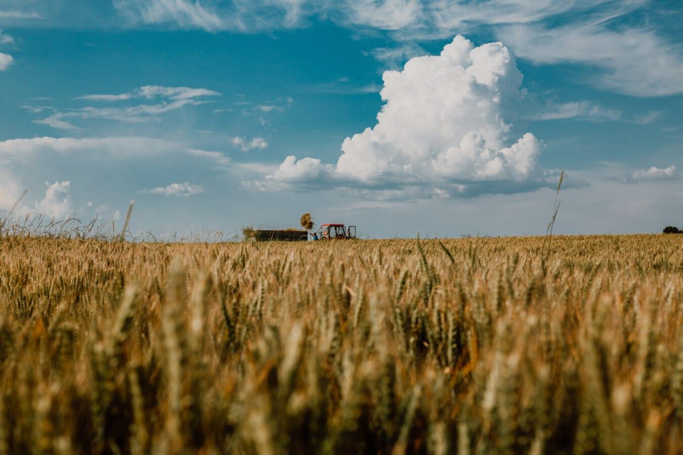 Landwirtschaft, Arbeit vor Ort, Traktor, Weizenfeld, Sommer, Getreide, Feld, des ländlichen Raums, Landschaft, Stroh