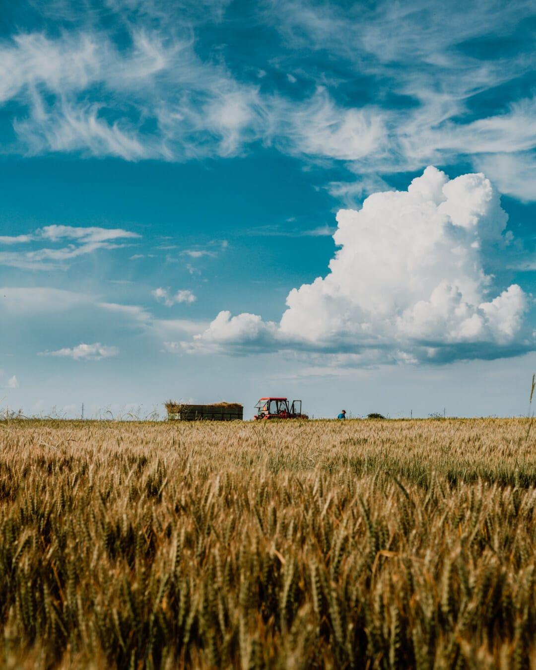 field work, tractor, harvestman, harvester, harvest, wheat, wheatfield, cereal, landscape, field