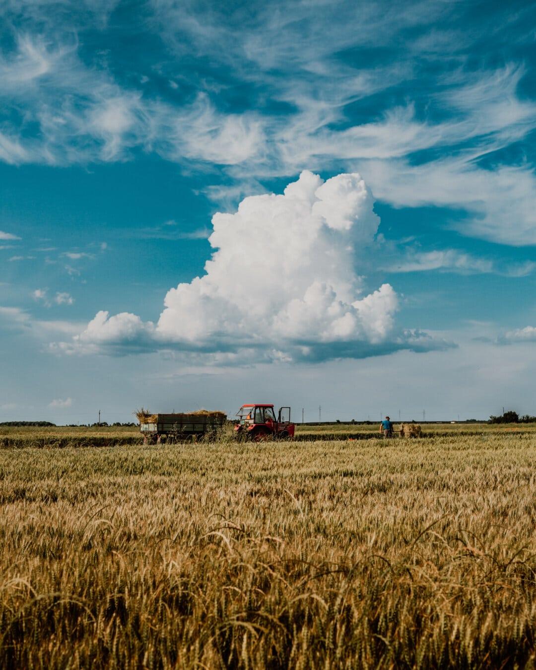 harvester, harvest, harvestman, summer season, wheatfield, cereal, wheat, machine, vehicle, tractor