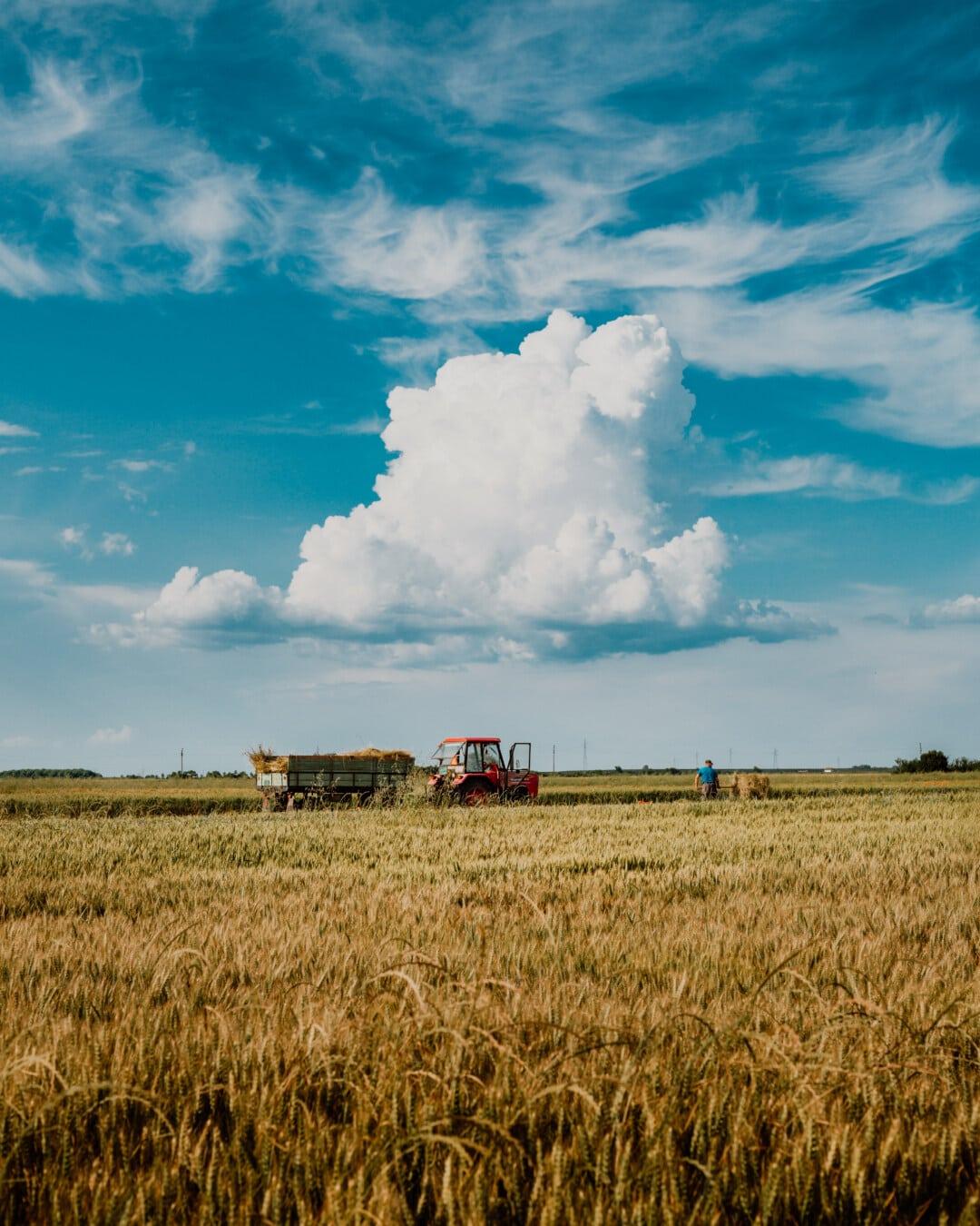 harvest, opilion, botte de foin, champ de foin, Hay, les terres agricoles, Agriculture, agriculteur, domaine, blé