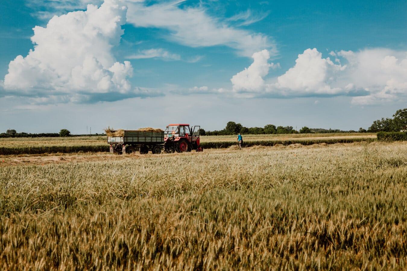 Hay, champ de foin, tracteur, botte de foin, agriculteur, homme, les terres agricoles, opilion, harvest, composant de collecte