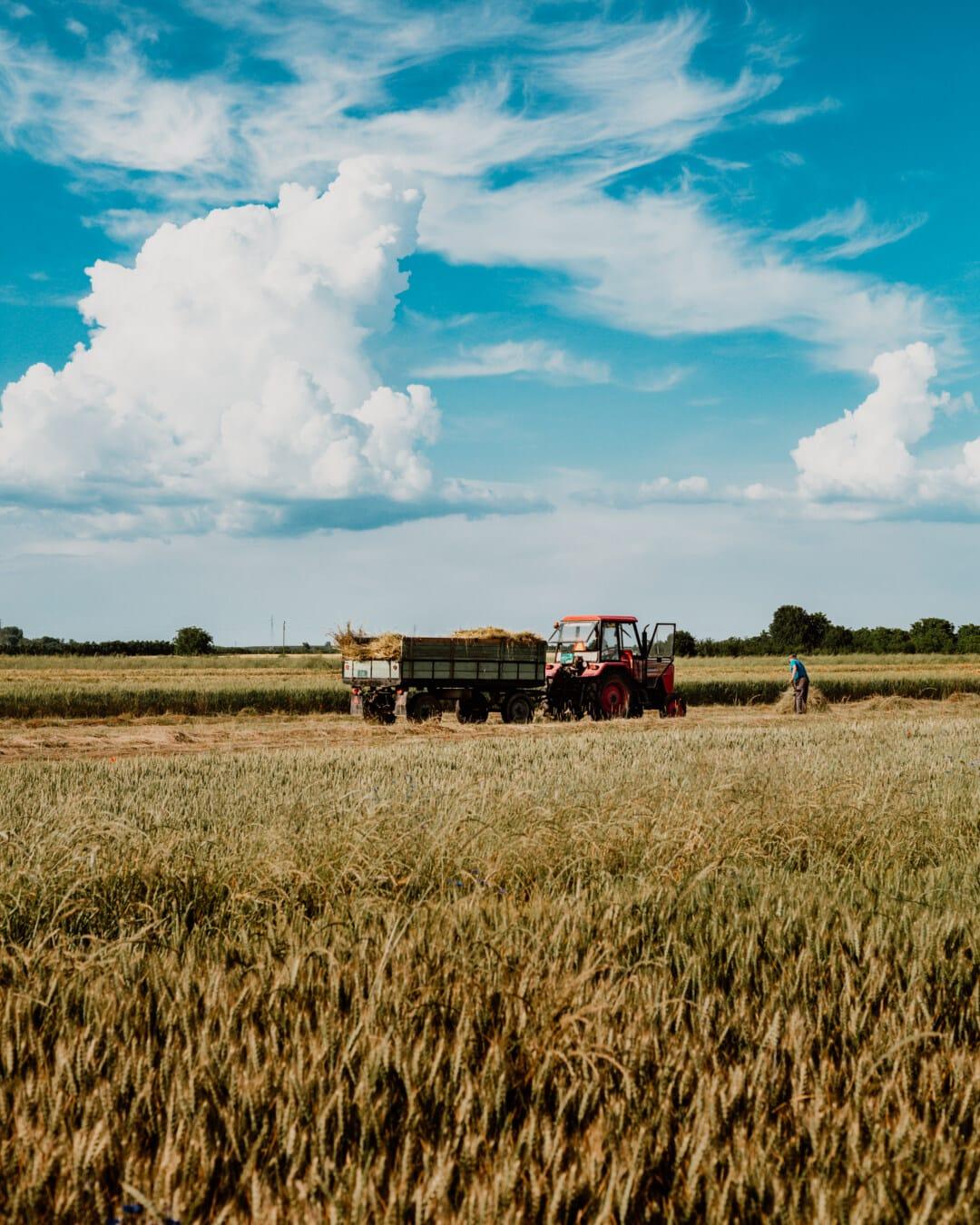 homme, travail, tracteur, Agriculture, travail sur le terrain, Hay, champ de foin, blé, ferme, paille