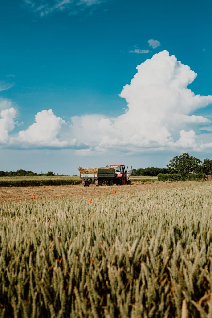 hay, hay field, haystack, tractor, transport, vehicle, field, landscape, farm, rural