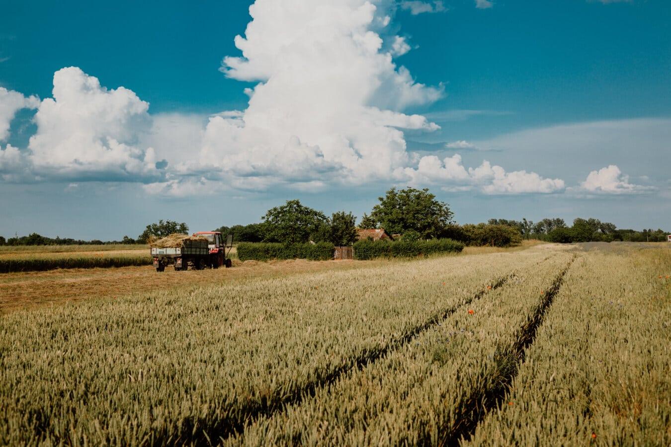 รถแทรกเตอร์, wheatfield, เกษตร, มหาสมุทร, ฟิลด์งาน, เฮย์, หญ้าแห้ง, ภูมิทัศน์, ฟาง, ฟิลด์