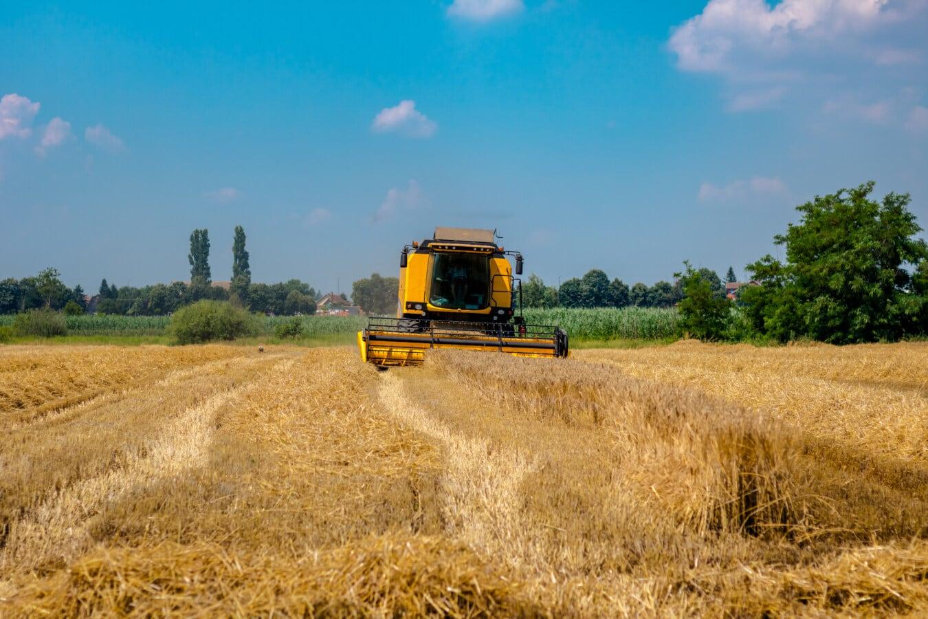 Fahrzeug, Harvester, Weizenfeld, Weizen, Landwirtschaft, Feld, Maschine, des ländlichen Raums, Bauernhof, Stroh