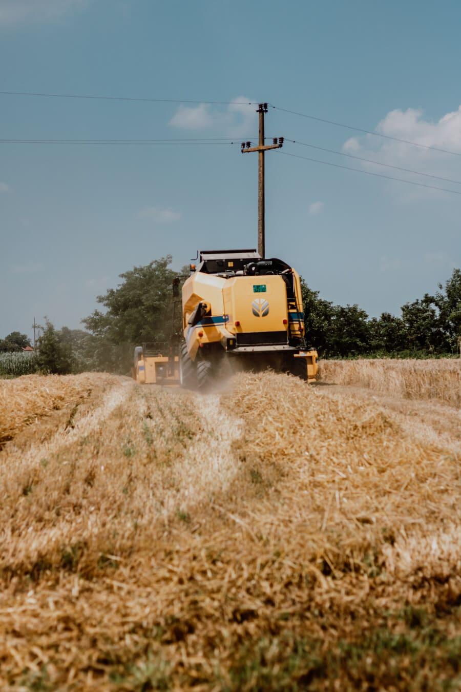 Fahrzeug, Harvester, Harvest, industrielle, Maschine, Landwirtschaft, Feld, des ländlichen Raums, Bauernhof, Weizen