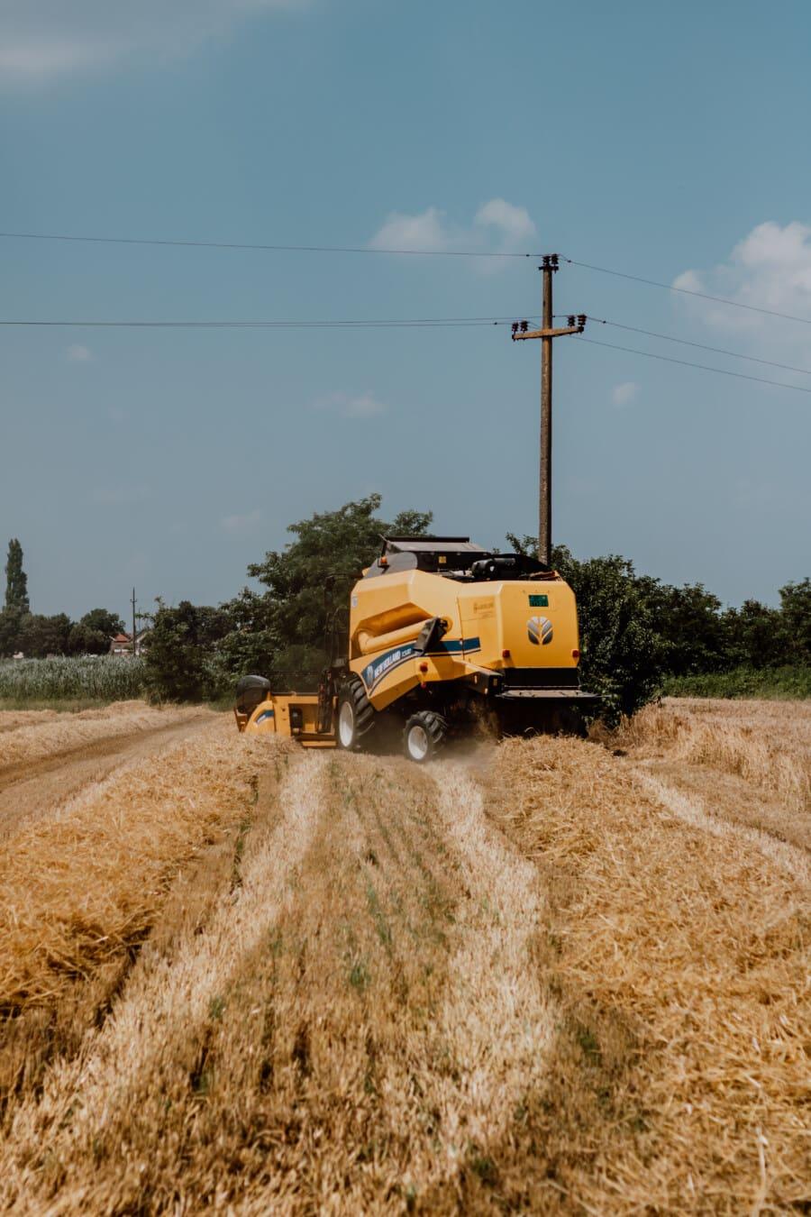 composant de collecte, machine, harvest, champ de blé, blé, Agriculture, campagne, unité, ferme, domaine