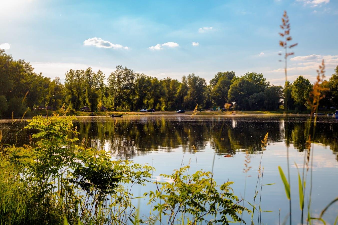 idyllic, lakeside, grassy, bushes, coast, lake, wetland, reflection, land, landscape