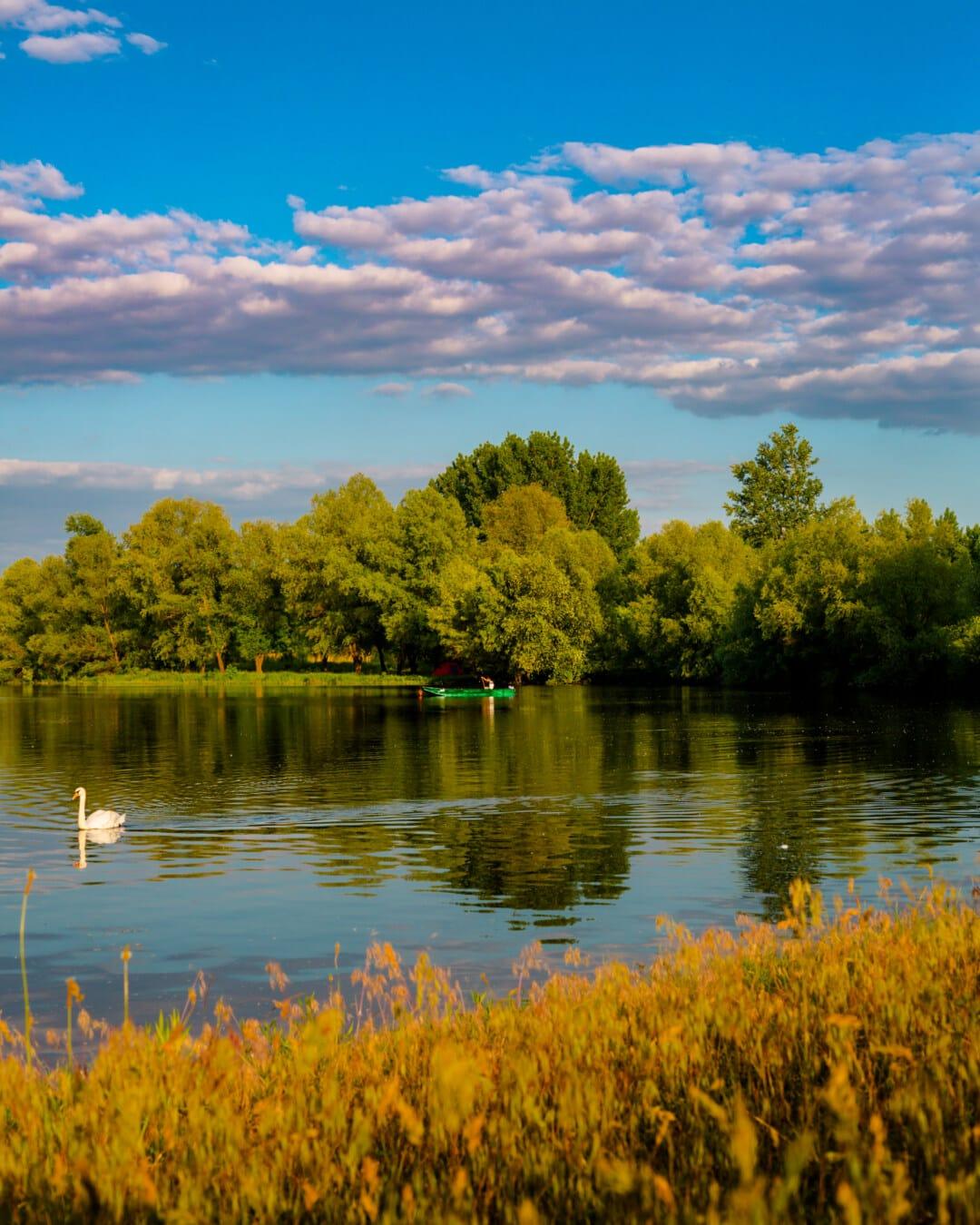 järvi, puu, joki, heijastus, Shore, maisema, vesi, luonto, valjeta, ulkona