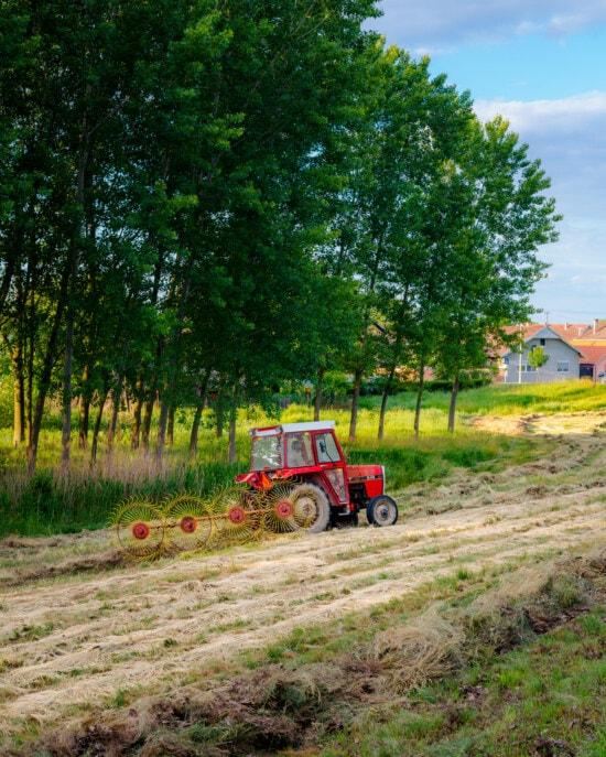 machine, agriculture, tractor, farmer, driver, hay field, hay, farm, rural, tree
