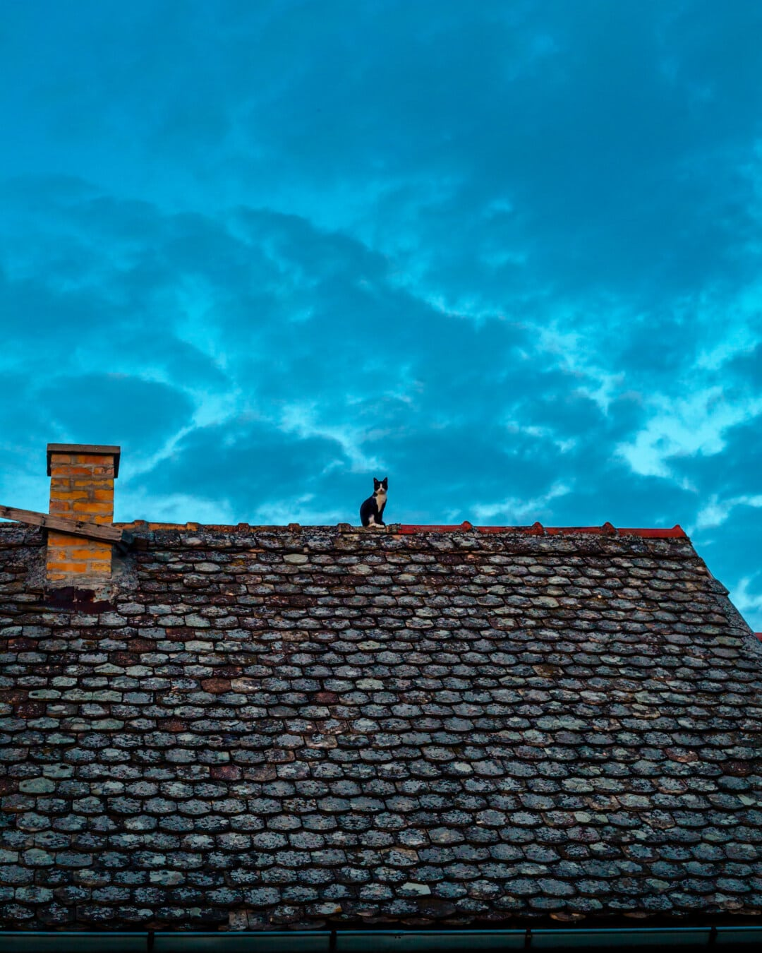 svart-hvitt, katten, taket, sitter, gamle, huset, materiale, taktekking, arkitektur, taket