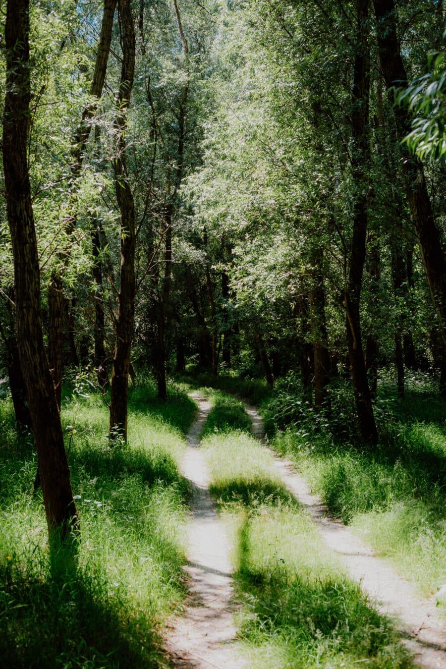 drogi leśne, wiosna, lasu, leśna ścieżka, Greenwood, zieleni, cień, krajobraz, roślina, park