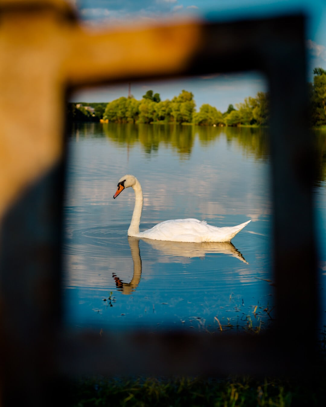 Vogel, Schwan, junge, Wasser, Tierwelt, Reflexion, waten Vogel, Natur, See, im freien