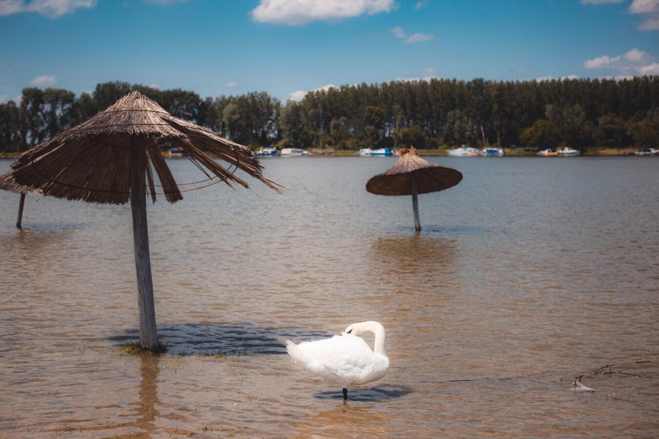Schwan, tropische, Strand, Sommersaison, Sonnenschirm, Wasser, Natur, See, Sonne, Sommer