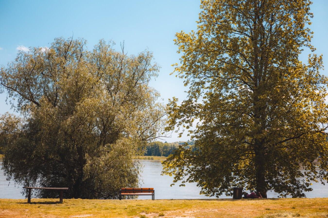 riverbank, summer, river, sunny, day, trees, autumn, leaf, tree, poplar