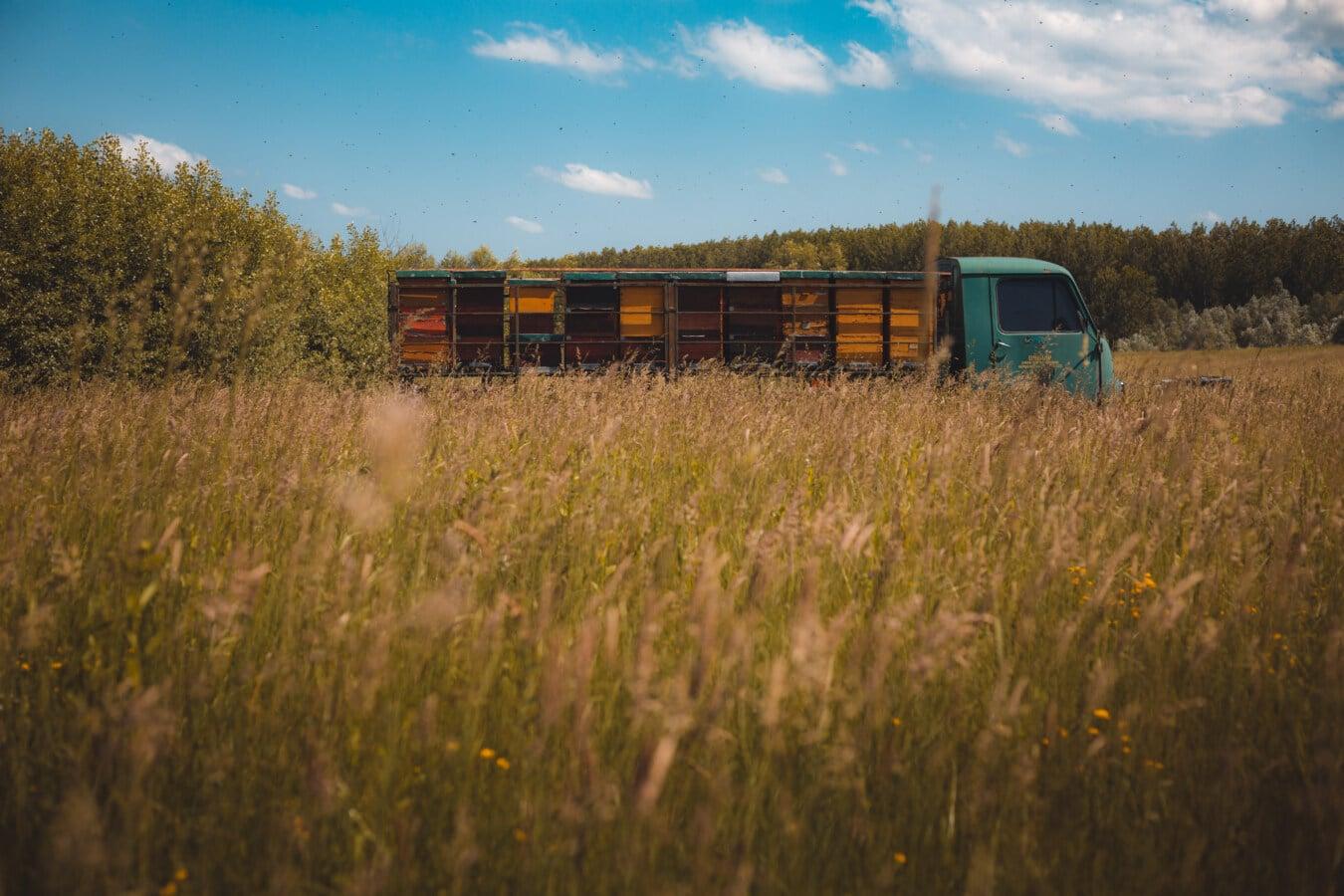 LKW, Bienenstock, Sommer, Feld, Wiese, Gras, Landschaft, des ländlichen Raums, Sonnenuntergang, Natur
