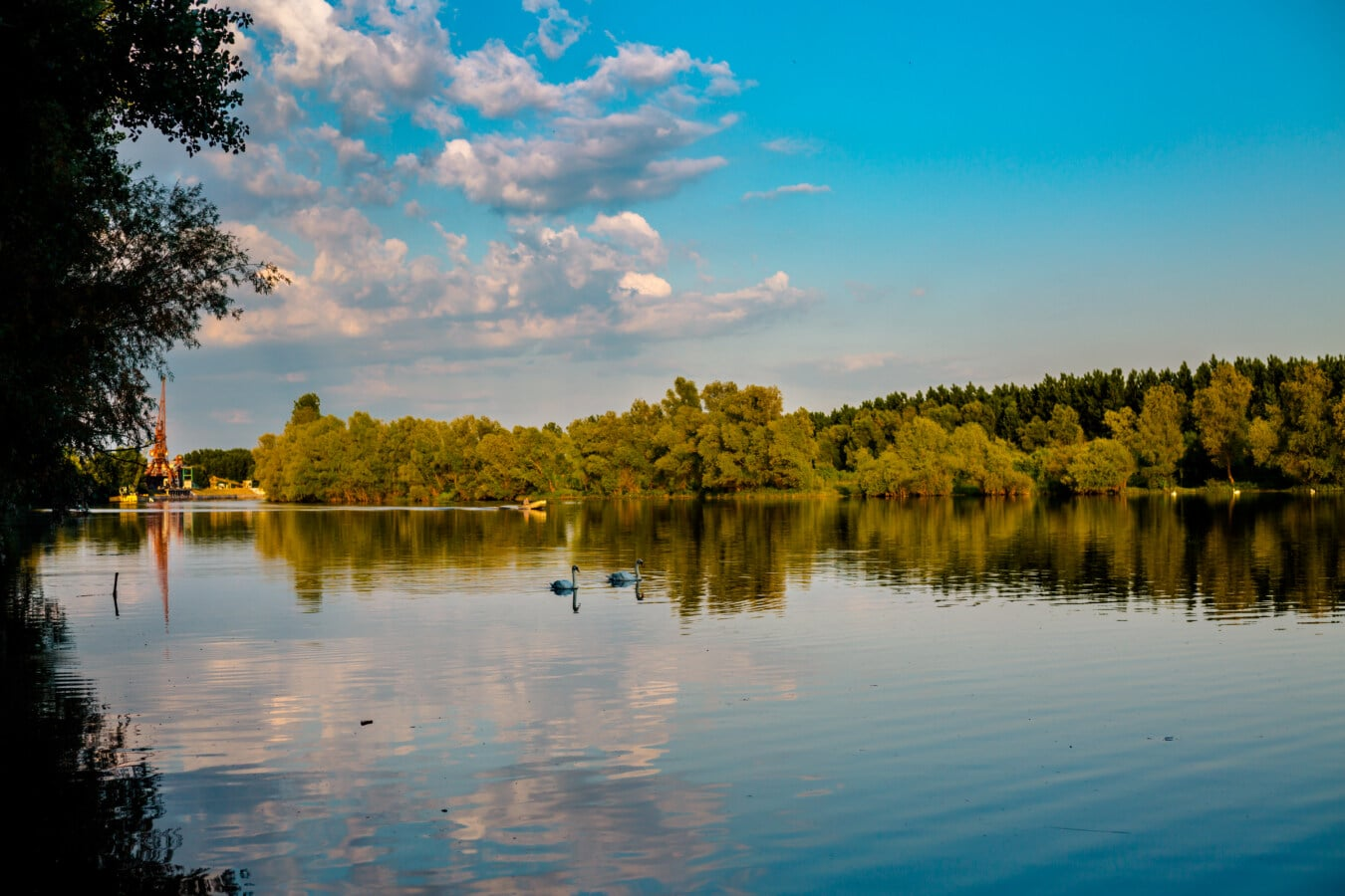 placide, au bord du lac, oiseaux aquatique, piscine, atmosphère, après midi, paysage, eau, réflexion, rive