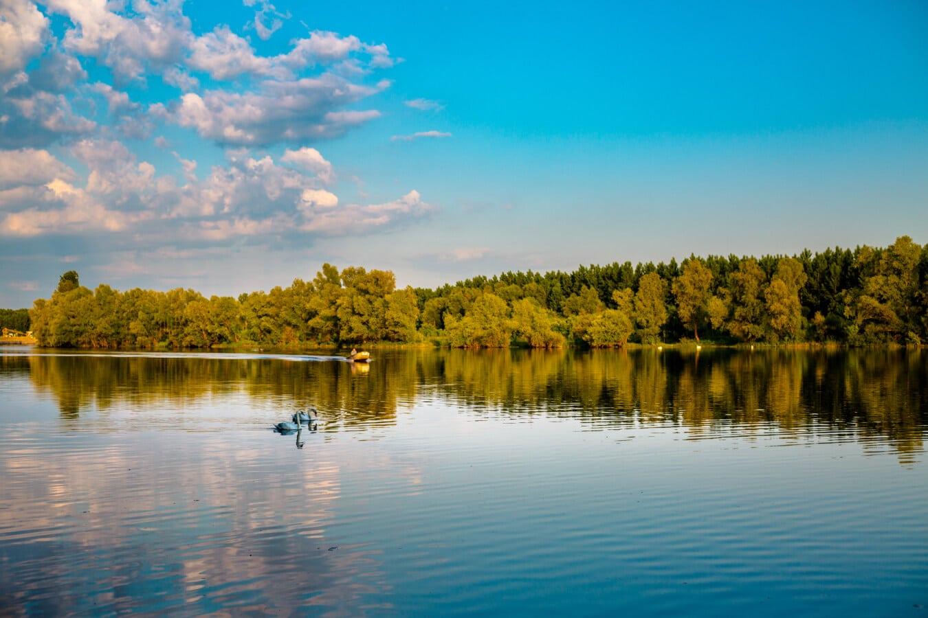 atmosphère, Lac, majestueux, cygne, paysage, forêt, arbre, réflexion, eau, aube