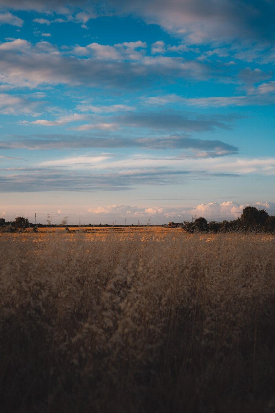 ensoleillée, journée, crépuscule, l'été, Agriculture, champ de blé, aube, atmosphère, coucher de soleil, paysage