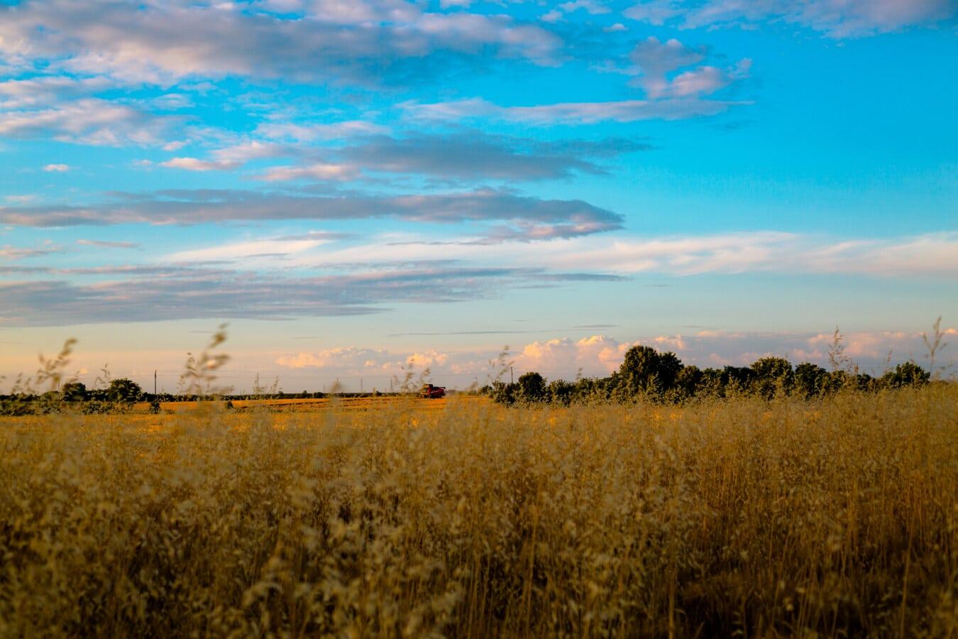 Gras, hoch, Landwirtschaft, des ländlichen Raums, Landschaft, Feld, Atmosphäre, Sonnenuntergang, Dämmerung, Natur