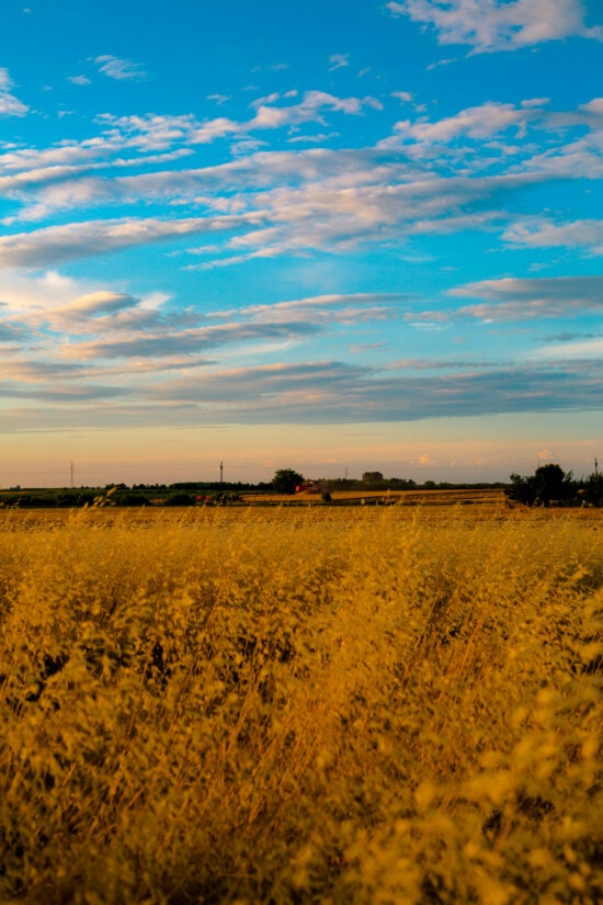 agriculture, field, grass, high, dry season, grassy, grass plants, dry, rural, atmosphere
