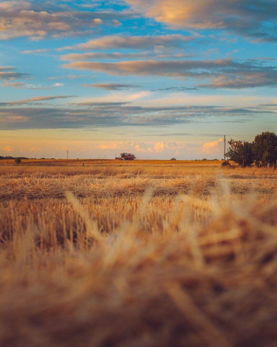 composant de collecte, blé, champ de blé, harvest, heure d'été, crépuscule, terrain, plain, domaine, Hay