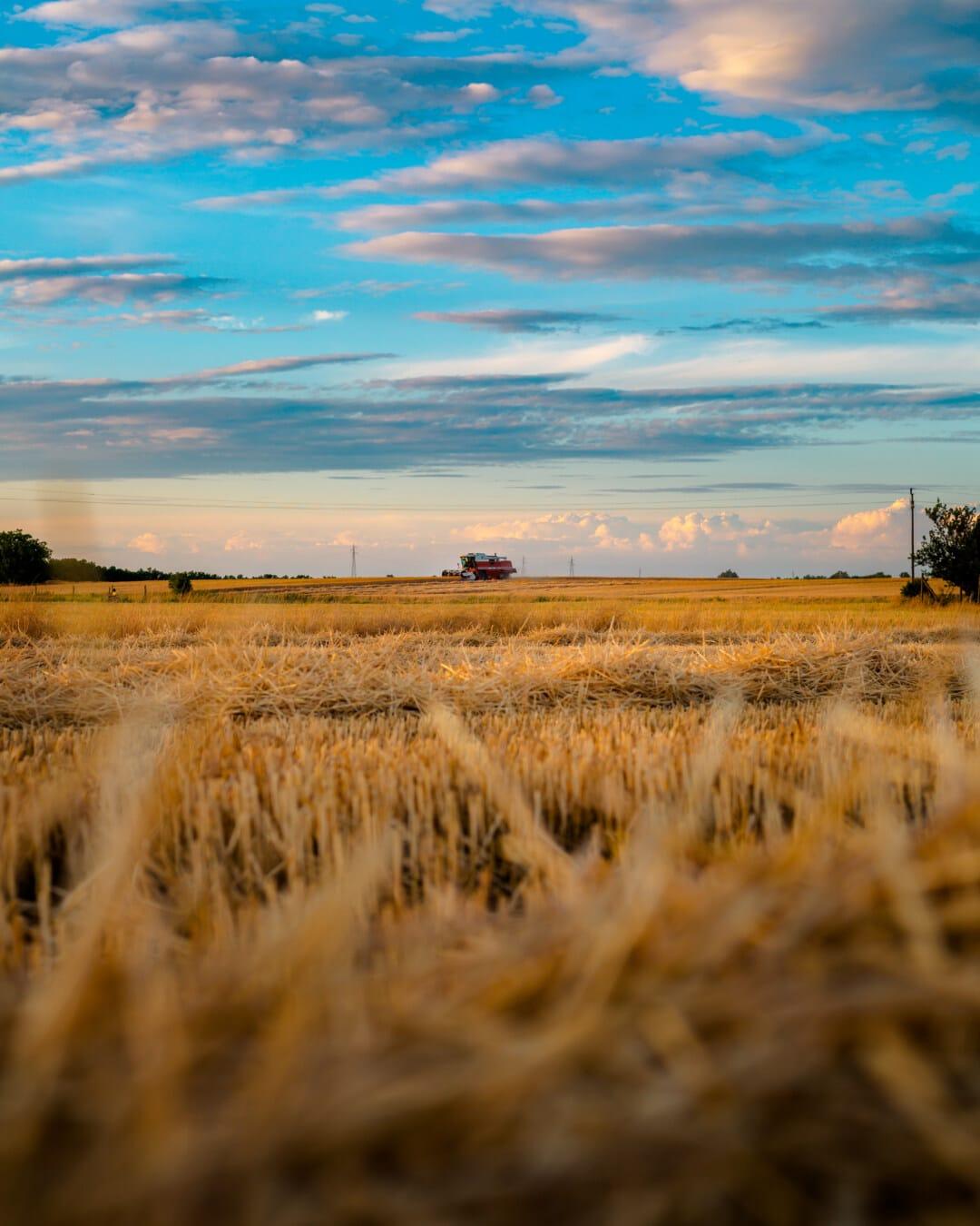 lúa mì, Wheatfield, xe chở gỗ, thu hoạch, rơm, hoàng hôn, cảnh quan, đồng bằng, cỏ khô, đất đai