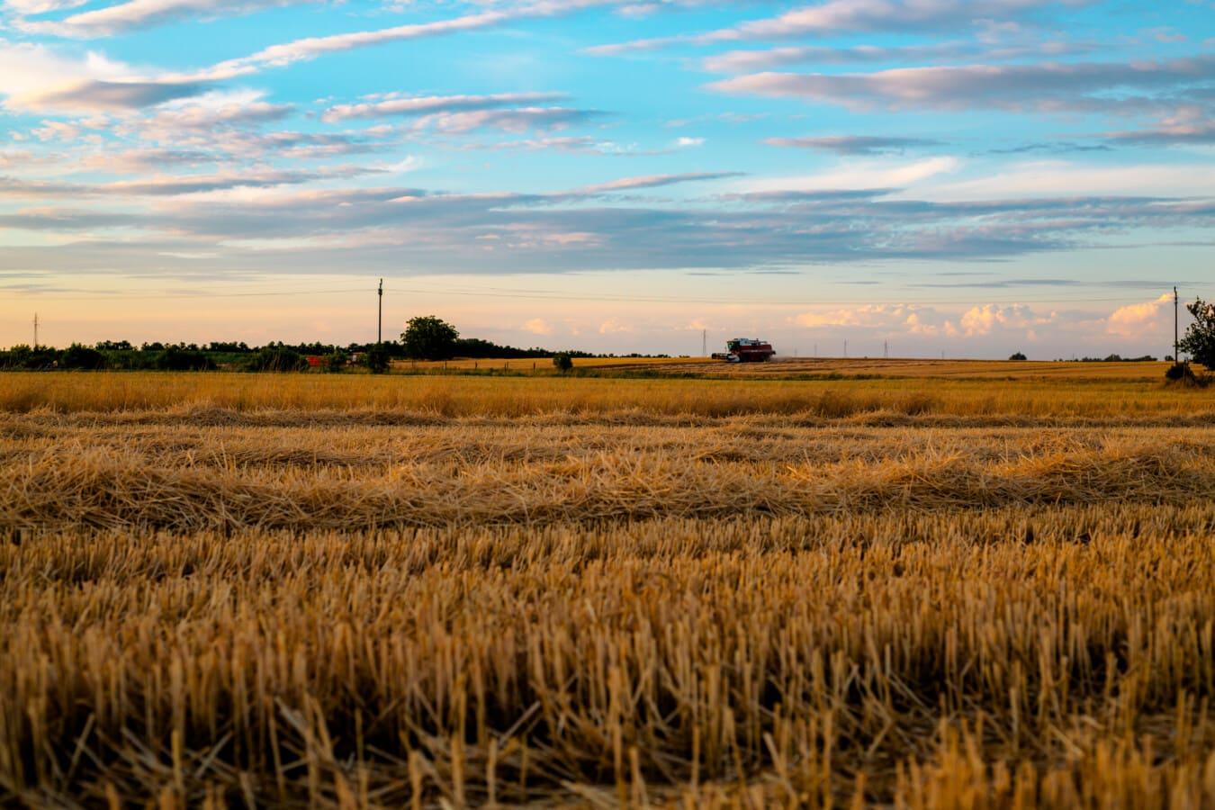 domaine, orge, harvest, Agriculture, rural, été, blé, paysage, céréale, ferme