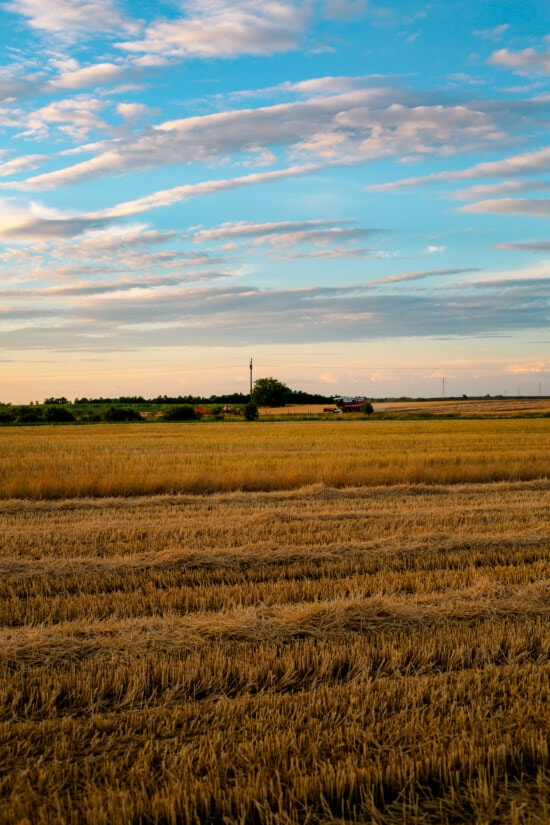 wheat, wheatfield, harvest, farmland, agriculture, rural, landscape, cereal, field, meadow