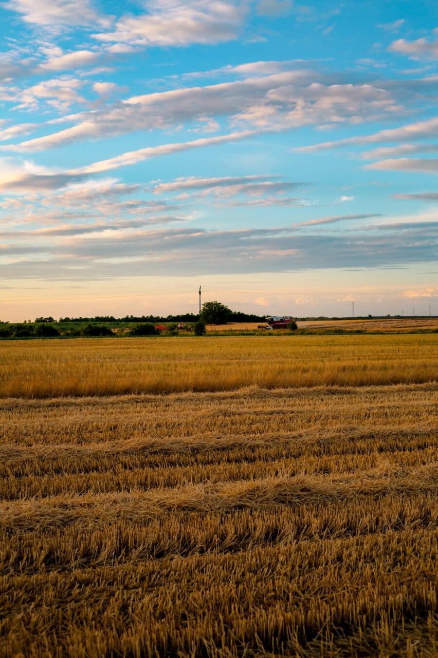 blé, champ de blé, harvest, les terres agricoles, Agriculture, rural, paysage, céréale, domaine, prairie