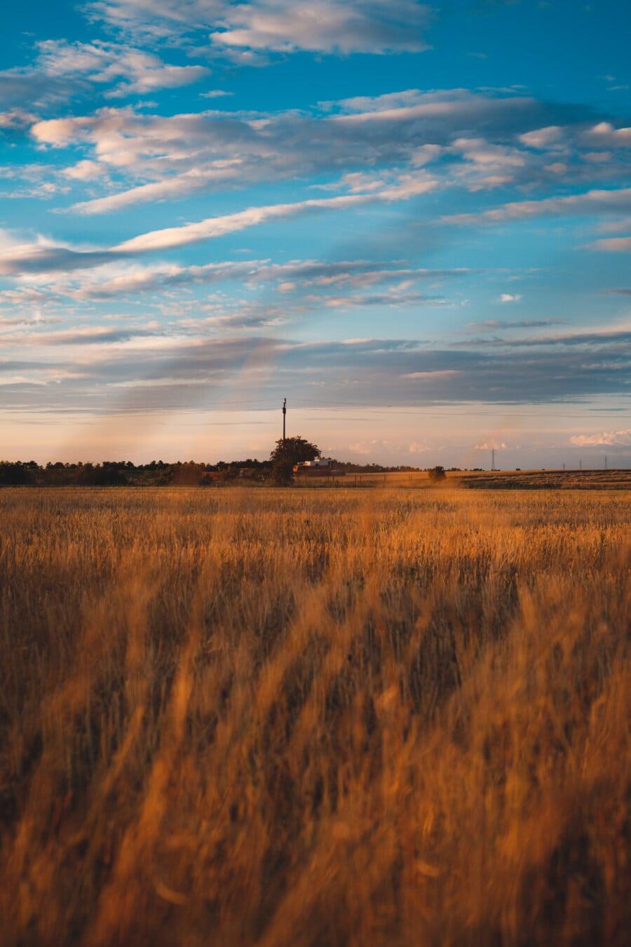 campagne, Agriculture, rural, champ de blé, coucher de soleil, domaine, paysage, aube, atmosphère, blé