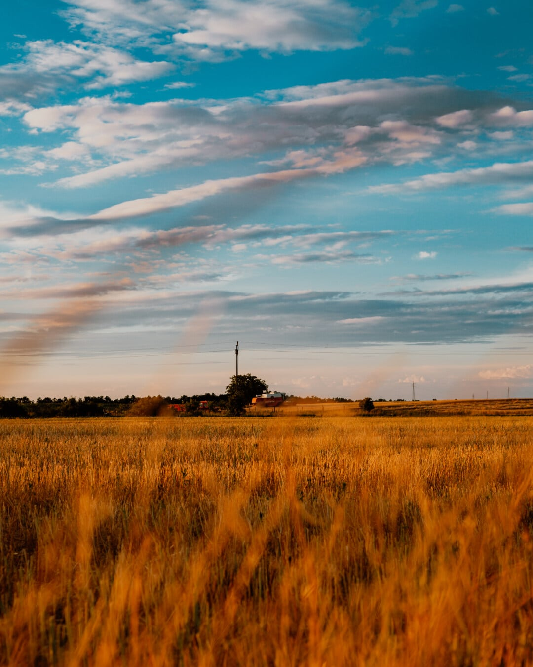 grassy, wheatfield, wheat, idyllic, afternoon, rural, landscape, countryside, sunset, agriculture