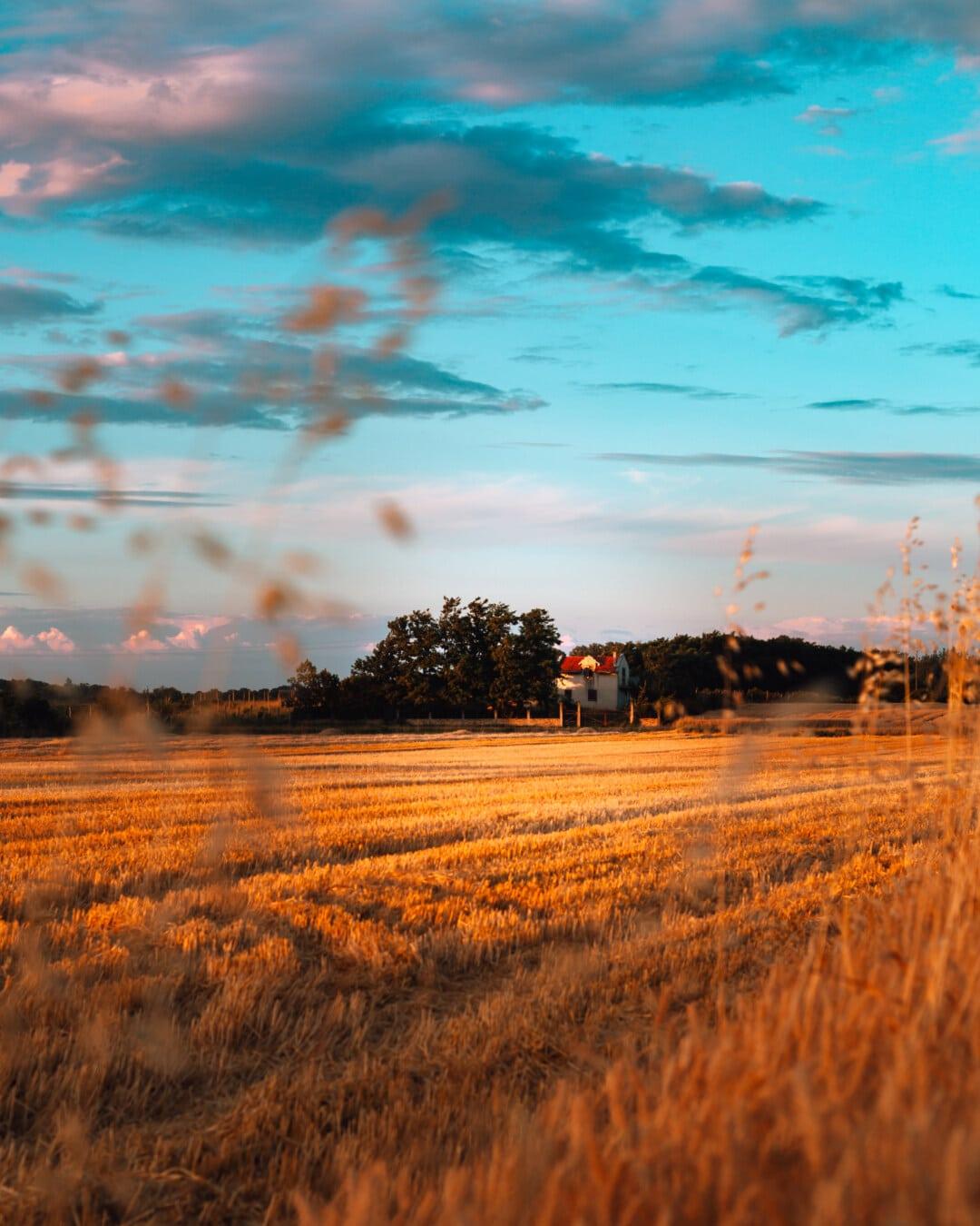 Landwirtschaft, Weizenfeld, Landschaft, Sonnenuntergang, Sonne, Sonnenaufgang, Wolken, Atmosphäre, Wolke, Sommer