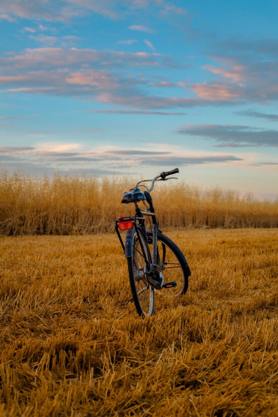 bicycle, wheatfield, wheat, agriculture, countryside, wheel, sunset, bike, outdoors, landscape