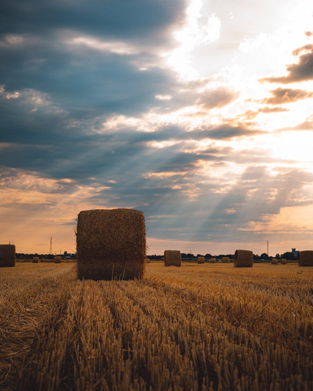 sonnig, Sonne, Sonnenlicht, Sonnenstrahlen, Hay, Heuhaufen, Heuernte, des ländlichen Raums, Feld, Feed