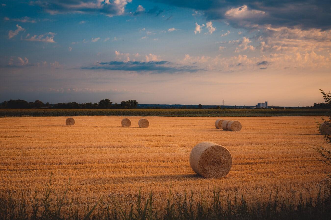 botte de foin, champ de foin, Hay, Sommet, soirée, paille, domaine, Agriculture, paysage, coucher de soleil