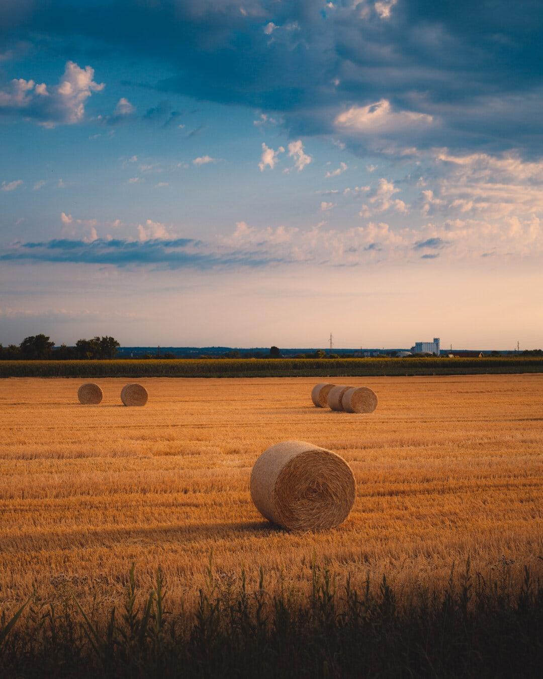 carul cu fân, fân, fân, amurg, grâu, peisaj, hrana pentru animale, agricultura, apus de soare, paie