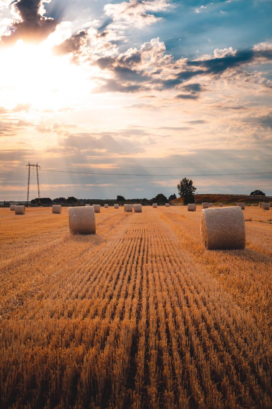 dag, soligt, solsken, hö fält, hö, runda, landsbygdens, skörd, gård, fältet