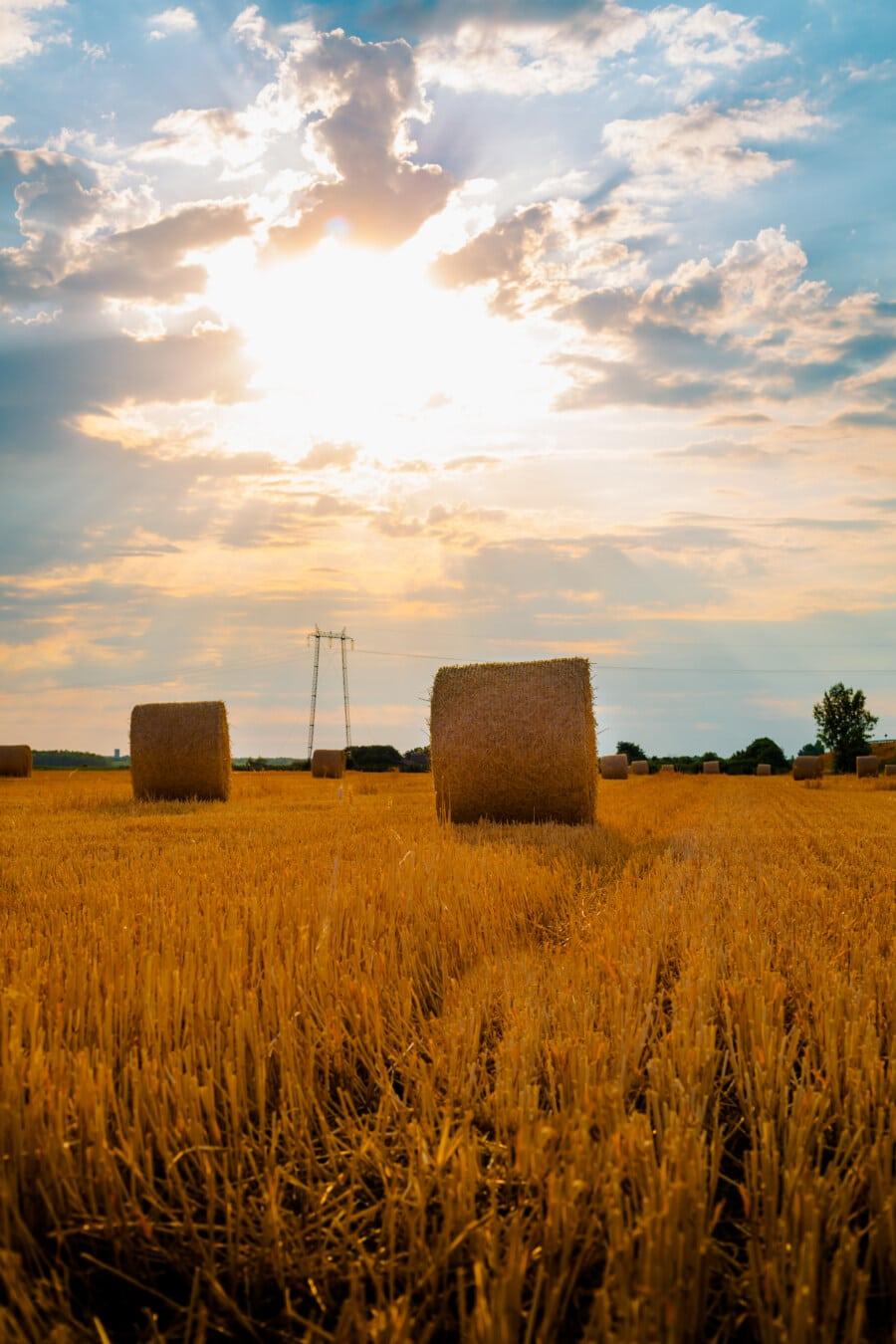 sunlight, sunny, sunshine, haystack, sunrays, hay field, hay, agriculture, field, harvest