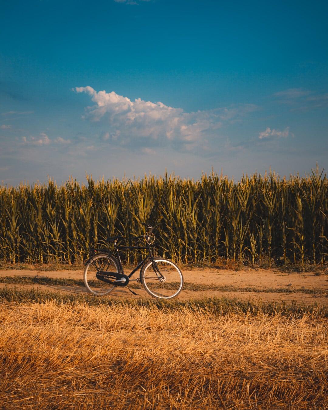 corn, cornfield, summer, bicycle, field, rural, wheat, sugar, landscape, cereal
