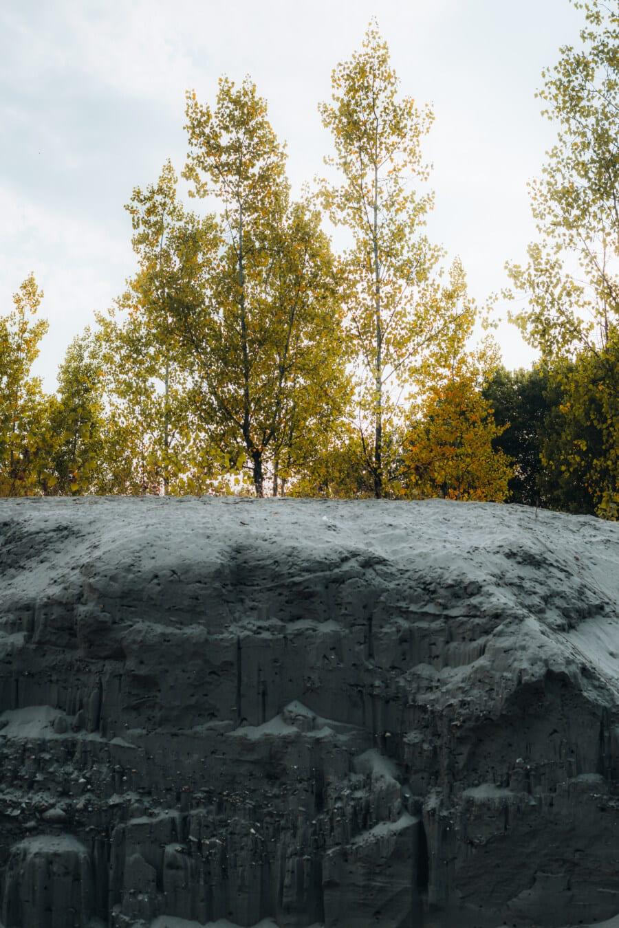 pijesak, dina, blatnjava ravnica, šuma, stabla, krajolik, vremenska prognoza, drvo, priroda, na otvorenom