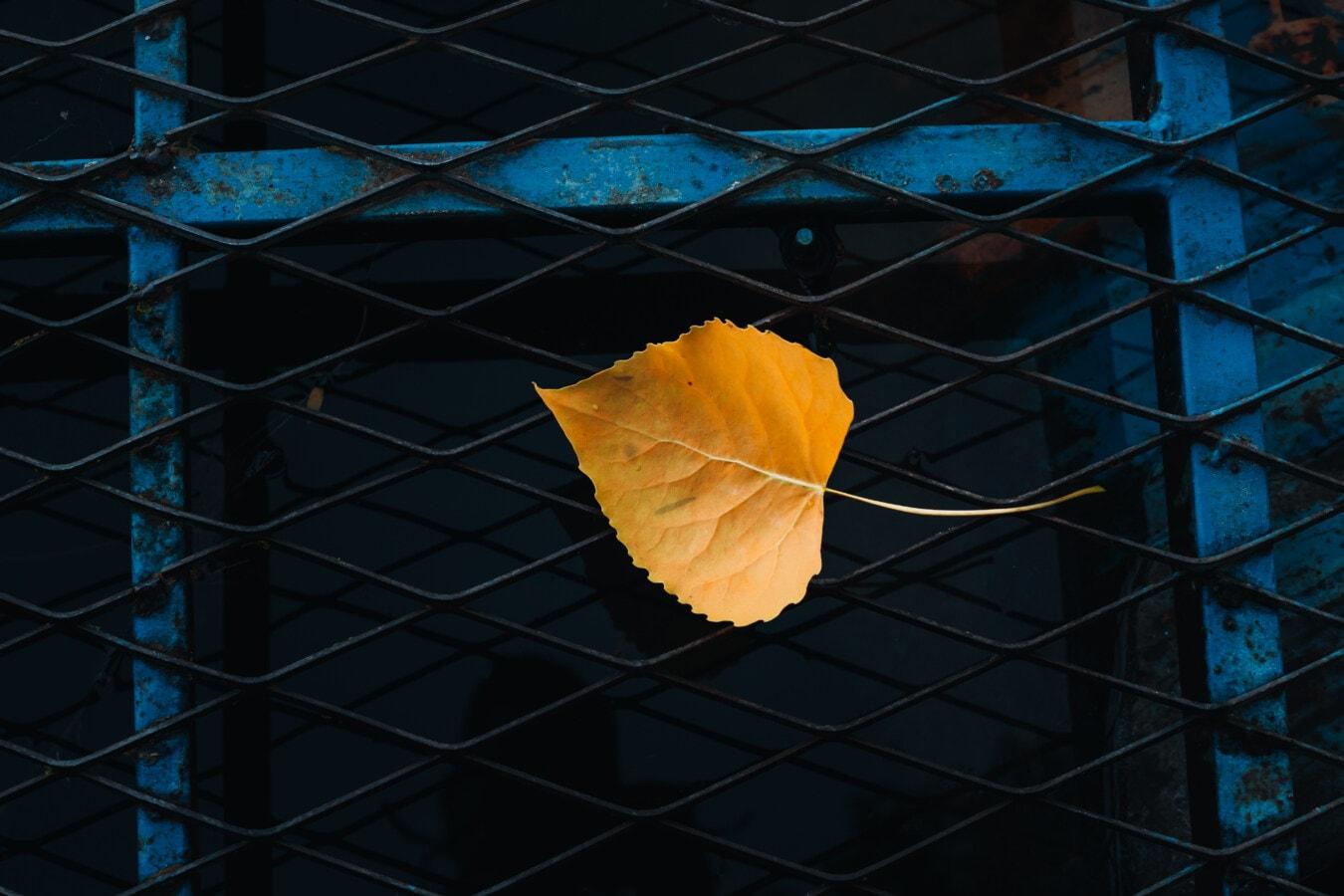 leaf, yellow, metal, grid, iron, steel, architecture, color, dark, urban