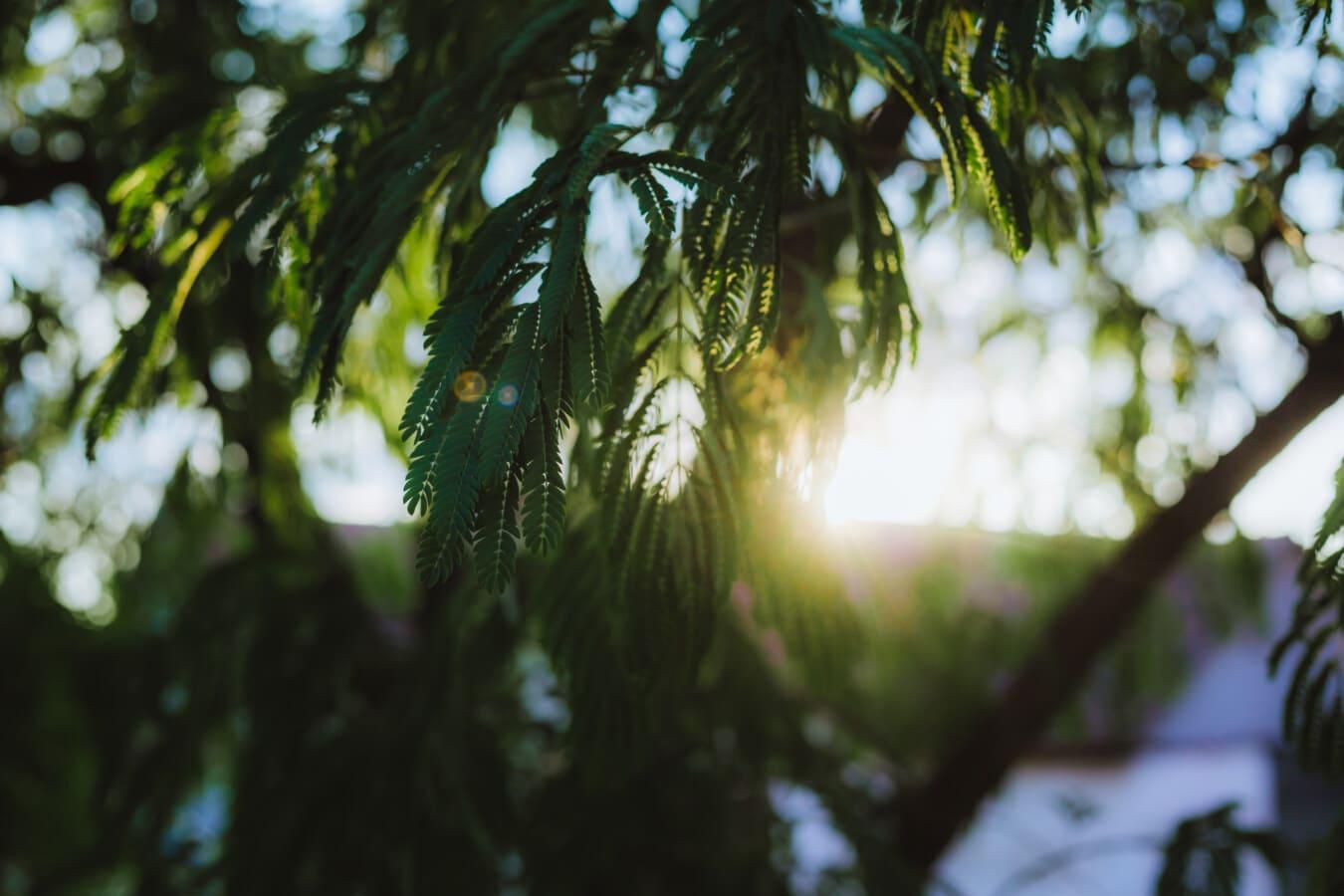 grüne Blätter, Sonnenschein, Sonnenfleck, Sonnenlicht, Sonnenstrahlen, Geäst, Struktur, Sonne, Blatt, Strand