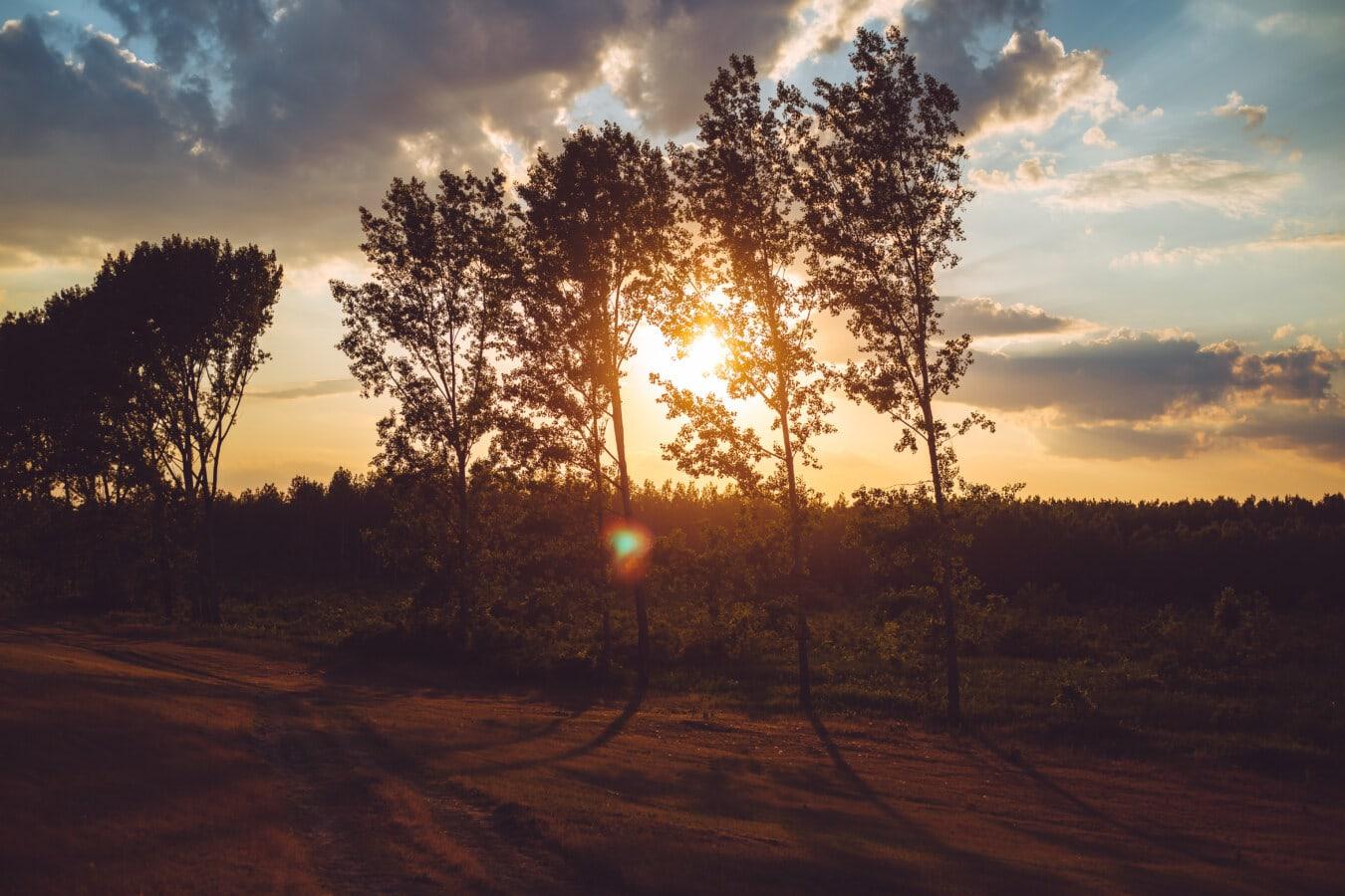 rural, sentier, Itinéraire, coucher de soleil, poussière, lumière du soleil, arbre, aube, paysage, soleil