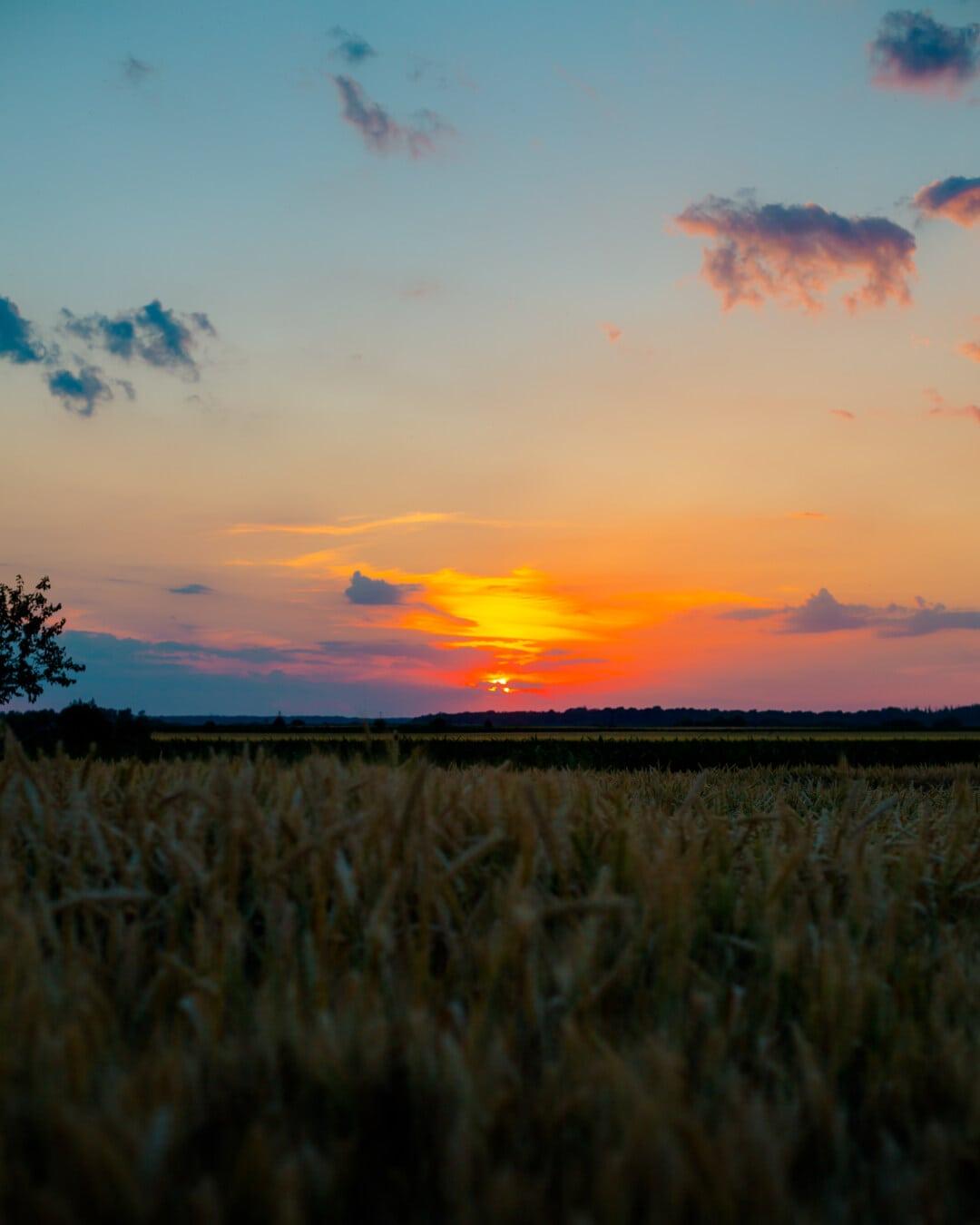 wheatfield, wheat, atmosphere, sunset, majestic, star, dawn, landscape, sun, countryside
