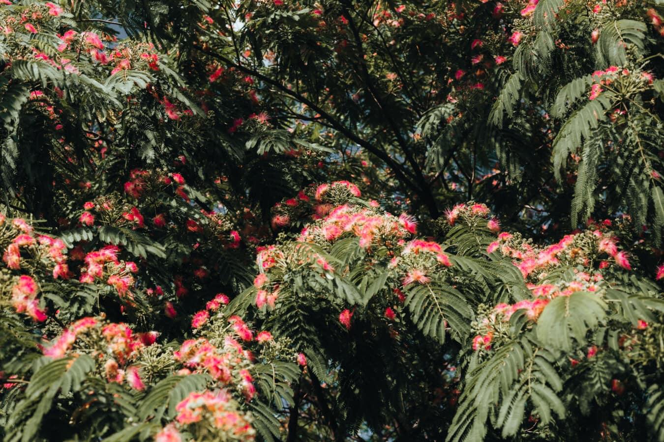 Struktur, tropische, blühen, Blumen, Rosa, Anlage, Strauch, Blatt, Natur, hell
