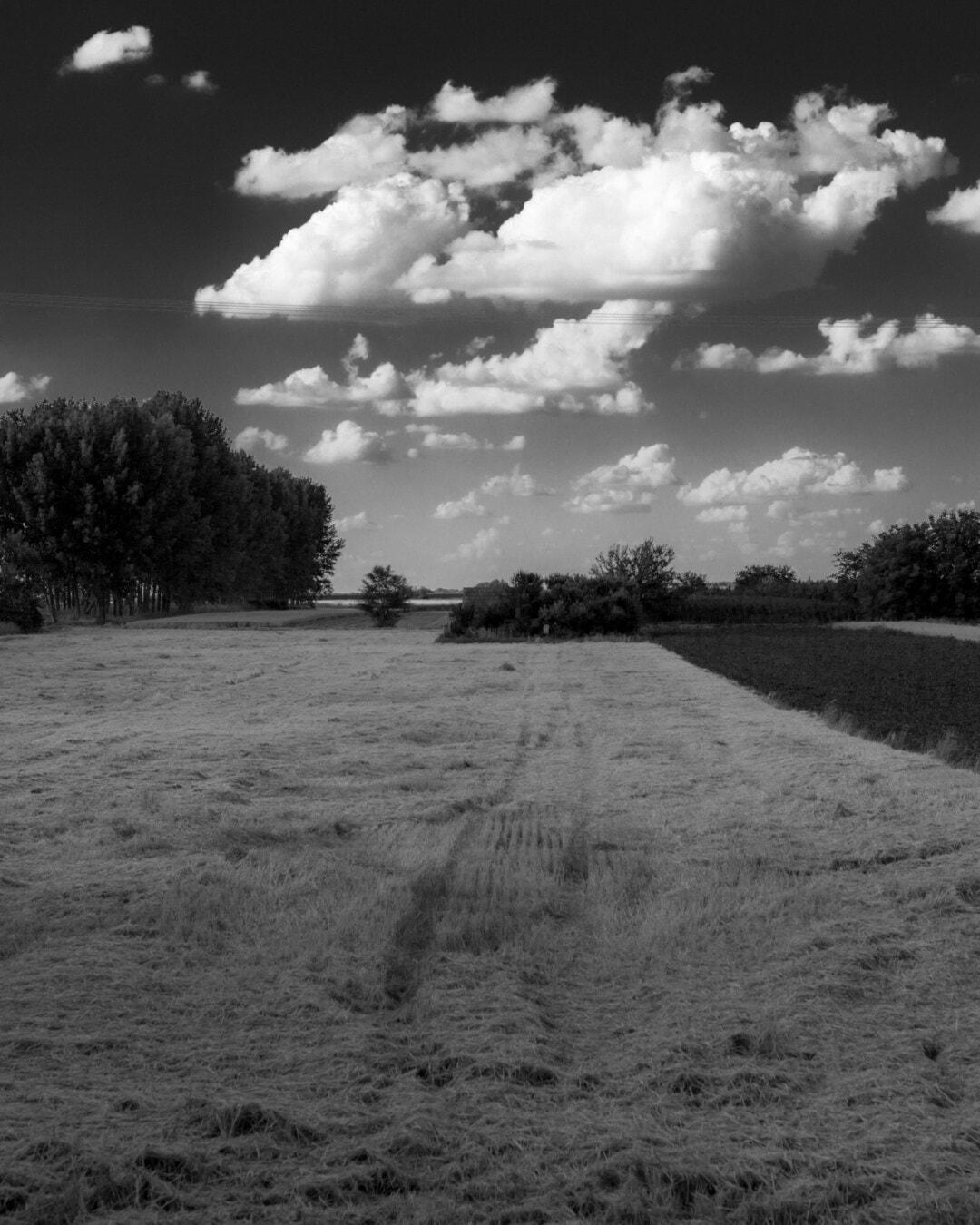 blé, noir et blanc, harvest, monochrome, champ de blé, arbre, paysage, Hiver, nature, ferme