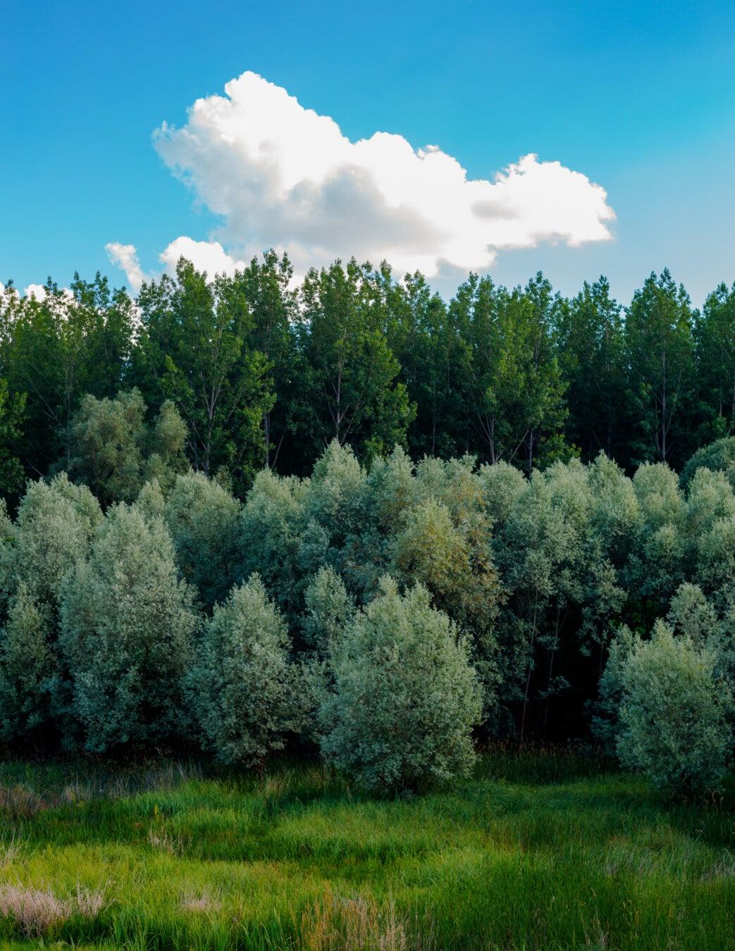 woodland, greenery, shrub, trees, forest, wood, nature, tree, landscape, plant