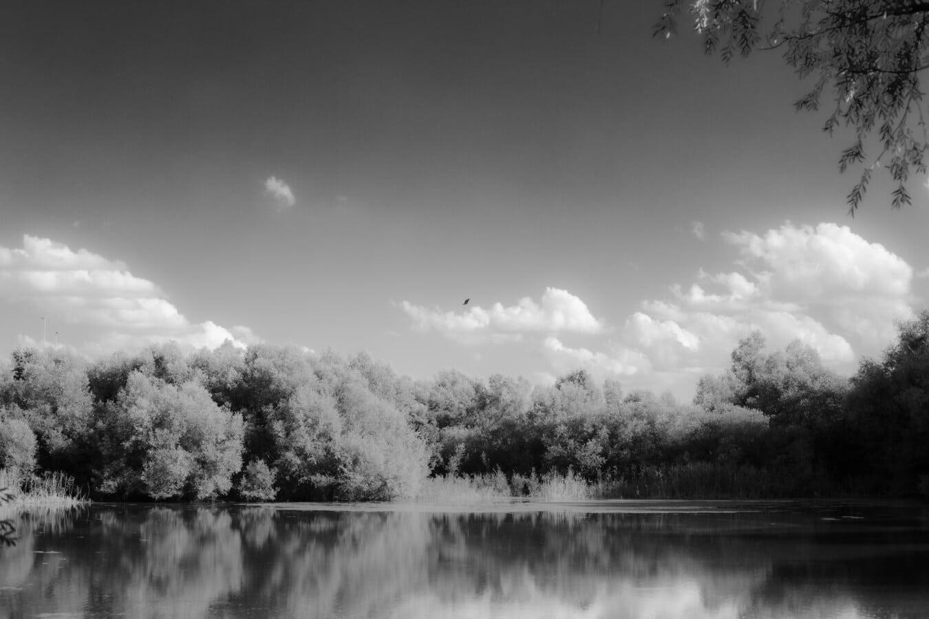 noir et blanc, gris, monochrome, Lac, au bord du lac, arbres, eau, atmosphère, paysage, arbre