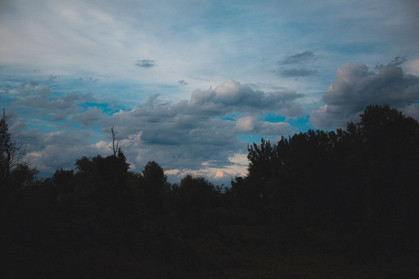 twilight, dusk, night, dark blue, clouds, forest, woodland, landscape, nature, sunset